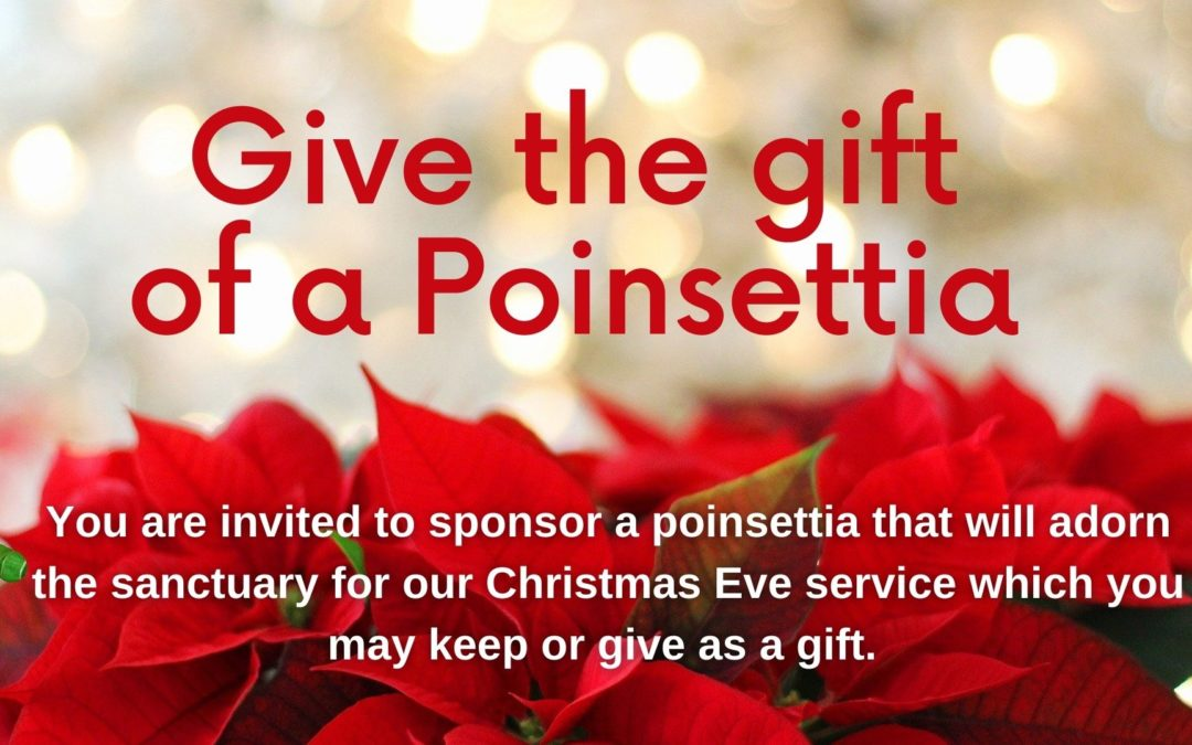 Give the gift of a Poinsettia