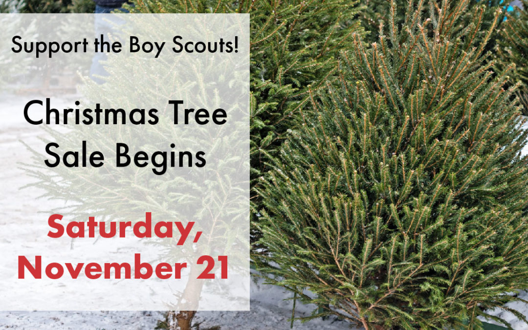 Support the Scouts – Buy a Christmas Tree